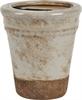 Rosemary Terracotta Pot