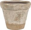 Thyme Terracotta Pot