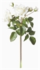English Rose Bundle, White