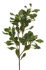 Pittosporum Spray