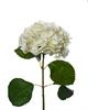 Hydrangea Stem White