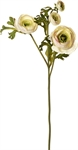 Ranuncula Flower, White