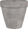 Tarragon Terracotta Pot