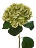 Hydrangea Stem Green